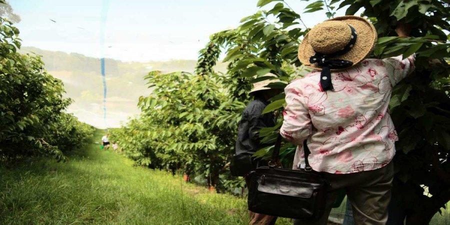 Farm Work, Fruit Picking & Animal Jobs