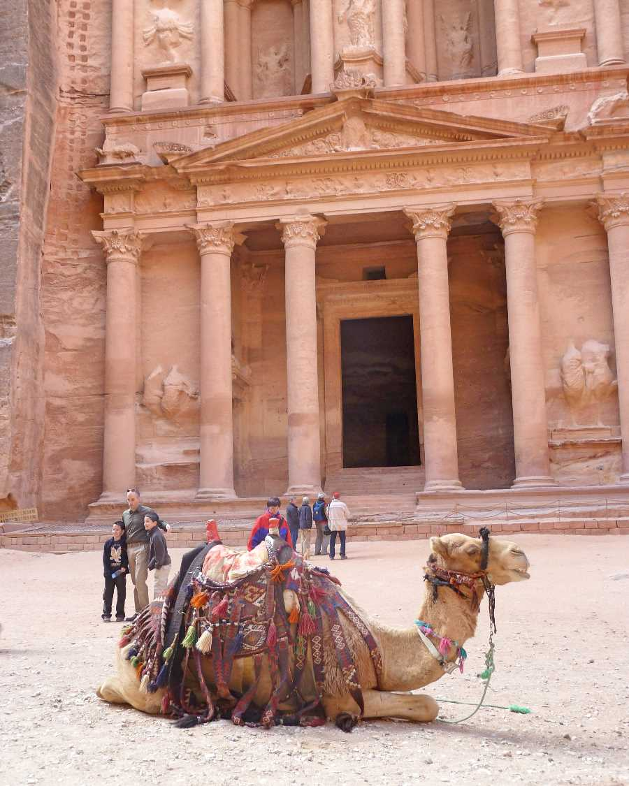 Camel in front of the Treasury
