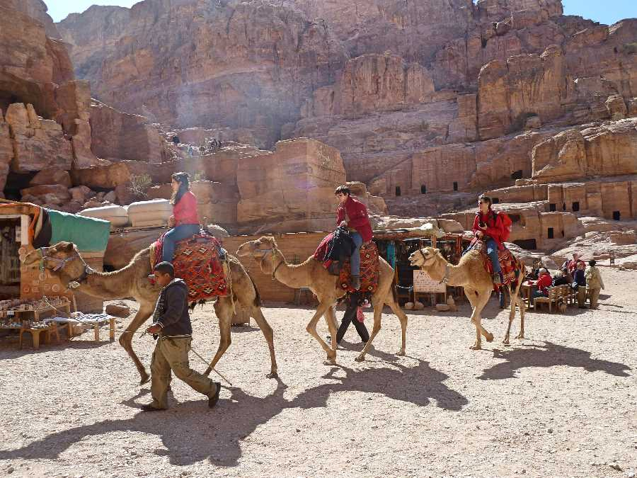 Camels carry tourists in Petra