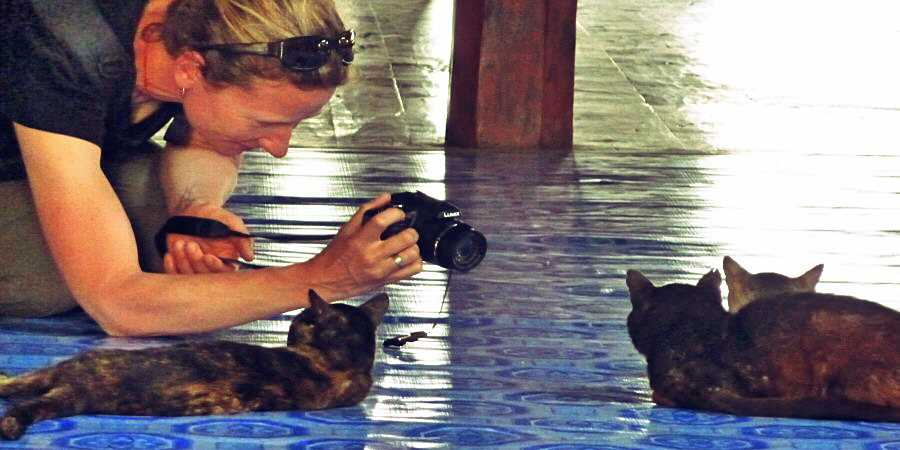 A woman takes a photo of a cat