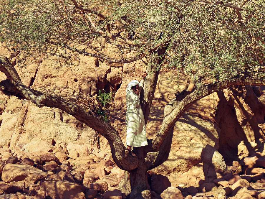 Bedouin man makes a phone call in a tree