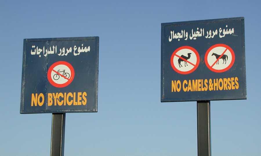 No camels and horses