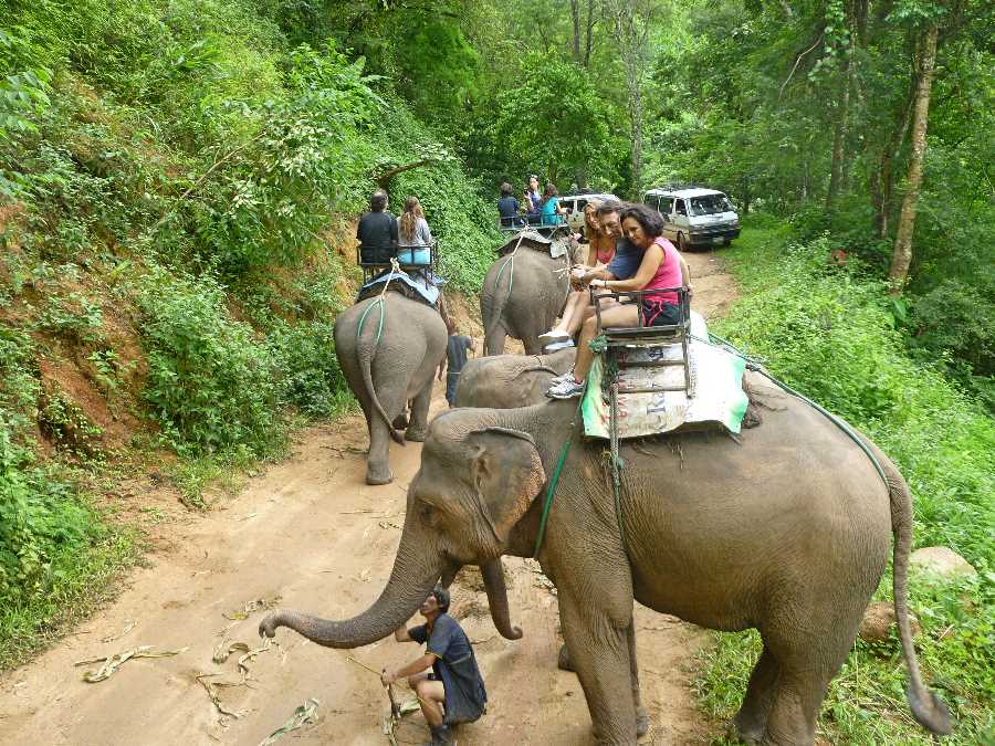 Elephant riding is no longer part of this tour