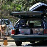 Backpacker driving jobs