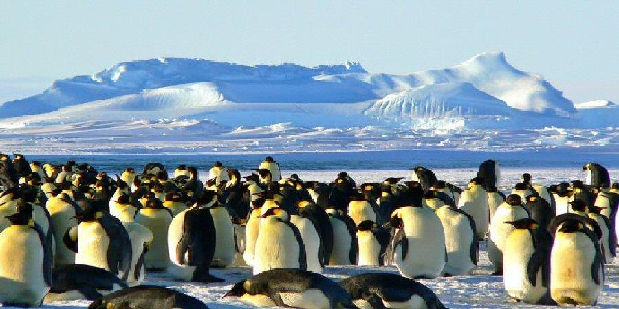 Read more about the article Polar Ice Caps Melting! How To Plan Your Cool Trip