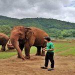 Elephant park volunteering
