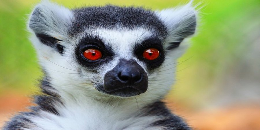 A gap year expedition to the Madagascar Lemur project