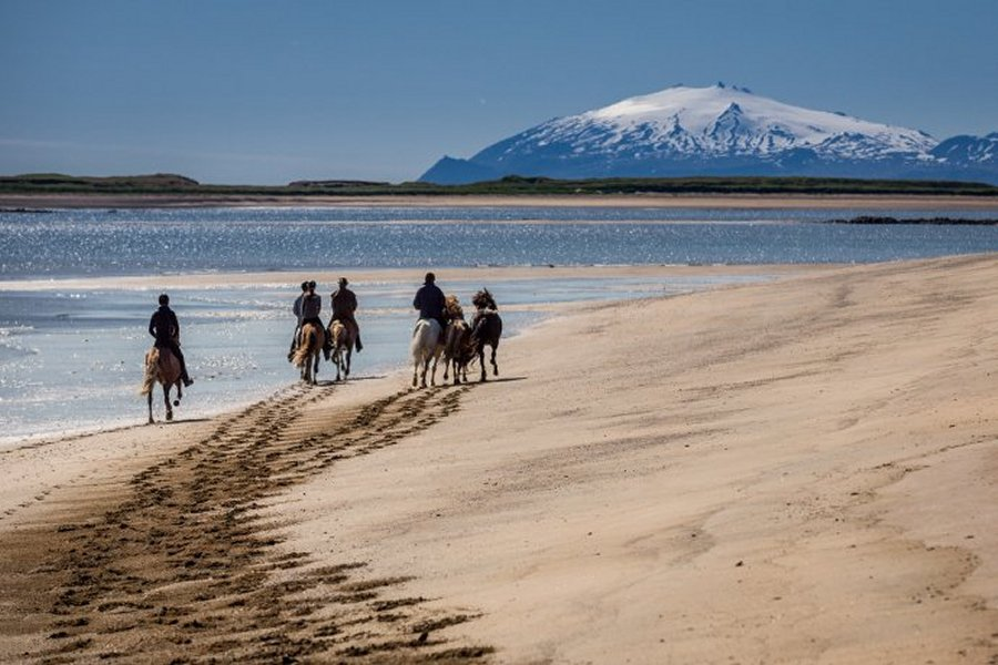 Horse or farm work exchanges in Iceland