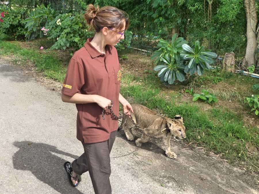 Volunteer work with animals