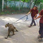 Volunteer at a safari park