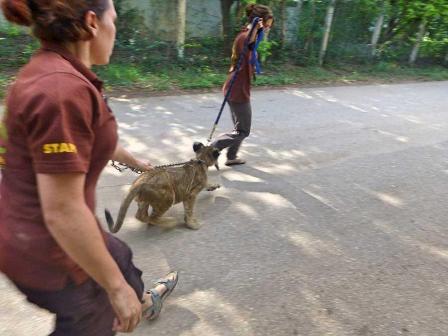 Volunteering in Kanchanaburi